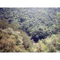 Il bosco dell'Elmo