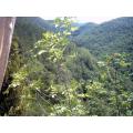 Vista sul bosco dell'Elmo