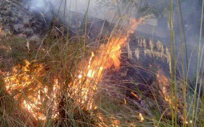 Misure preventive contro il rischio di incendio boschivo