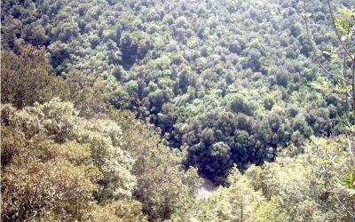 Misure preventive contro il rischio di incendi boschivi