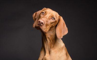 Misure in materia di comportamento dei proprietari dei cani nei luoghi ed esercizi aperti al pubblico, giardini pubblici, parchi e aree pubbliche
